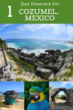 Plan the perfect 1 day in Cozumel, Mexico! Whether you're cruising to Cozumel or boating over for a visit, discover how to make the most of Cozumel! Cozumel Mexico, Mexico Vacation, Mexico Travel, Maui Vacation, Belize Travel, Puerto Vallarta, Tulum, South America Travel, North America