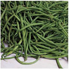 recipe: bush bean seeds home depot [24]