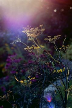 September's soft, warm light tickling some wildflowers. Gorgeous!