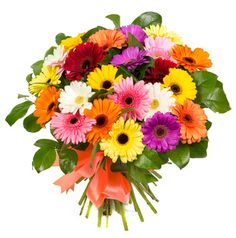 Bouquet of colorful gerberas Photos Bouquet of colorful gerberas isolated on white background by Lopatin Photo Red Roses Background, Natural Background, Pastel Balloons, Its A Boy Balloons, Best Online Flower Delivery, Dark Chocolate Orange, Garden Express, Anniversary Flowers, Happy Anniversary