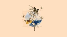 Find out: Vintage Butterfly wallpaper on  http://hdpicorner.com/vintage-butterfly/