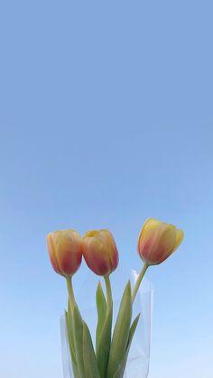 배경화면 of November Aesthetic Pastel Wallpaper, Aesthetic Backgrounds, Aesthetic Wallpapers, Tulips Flowers, Beautiful Flowers, Kunst Inspo, Image Originale, Minimalist Wallpaper, Iphone Background Wallpaper