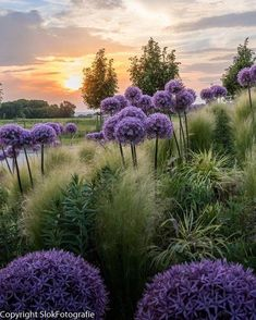 Beautiful Nature By Rini Slok Alliums. Beautiful Nature By Rini Slok Alliums. The post Beautiful Nature By Rini Slok Alliums. appeared first on Fotografie. Beautiful World, Beautiful Places, Beautiful Pictures, Landscape Design, Garden Design, Landscape Photography, Nature Photography, Dream Garden, Nature Pictures