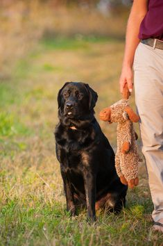 © Alice G Patterson Photography | Daily Dog Tag | English Labrador Retriever, on location dog photography