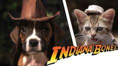 Indiana Bones: En busca del ladridoperdido, es una parodia canina de 'Indiana Jones' popular cinta que tendría nueva entrega en los próximos años.  FinalCutKing ha creado una gran parodia de la popular cinta 'Indiana Jones' en la que el protagonista es un cachorro travieso q