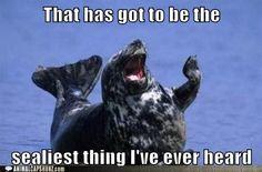 Seal! Animal pun humor entertains me far more than it should...