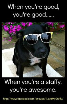 Uplifting So You Want A American Pit Bull Terrier Ideas. Fabulous So You Want A American Pit Bull Terrier Ideas. Staffy Dog, Nanny Dog, Pitt Bulls, Dog Shaming, Pit Bull Love, Bull Terrier Dog, Dog Quotes, Bully Quotes, True Quotes