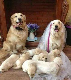 Esta fiesta de boda llena de orgullo.