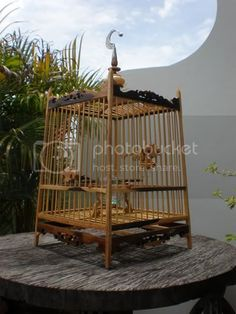 Big Bird Cage, Antique Bird Cages, The Caged Bird Sings, Wrought Iron Gates, Bird Boxes, Wood Bird, Pet Furniture, House Painting, Beautiful Birds