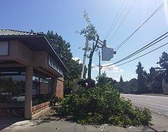 Tree Company in Mount Vernon