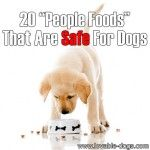 "20 ""People Foods"" That Are Considered Safe For Dogs"