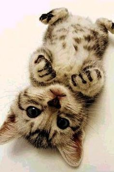 awe! I'm not even a cat 'person' but this is damned cute!