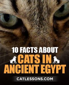 10 interesting facts about cats in Ancient Egypt