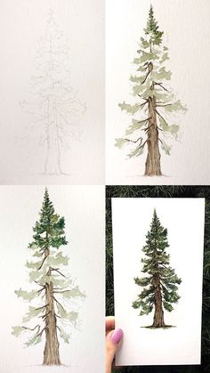 Watercolor Pine Tutorial - Mini tutorial of a pine with step by step process ph. - Watercolor Pine Tutorial – Mini tutorial of a pine with step by step process photos. Watercolor Trees, Watercolor Paintings, Watercolor Portraits, Watercolor Artists, Watercolor Landscape, Watercolor Painting Tutorials, Artwork Paintings, Watercolor Beginner, Step By Step Watercolor