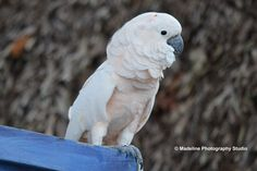 White bird whild life photography rescue by MadelinePhotoStudio