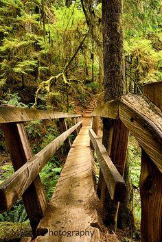 Olympia National Forest Washington Bridge to Marymere Falls by MScottPhotography, #pacificnorthwest  #pnw #marymerefalls