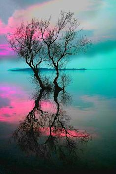 trees chasing each other through a lake