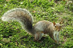 Orava, Villi, Eläimet