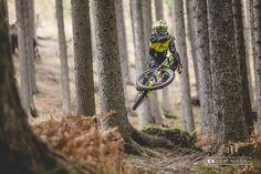 Cruising the Woods
