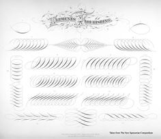 """""""Times New Roman""""-The New Spencerian Compendium Of Penmanship.my embroidery inspirations Caligraphy Pen, Flourish Calligraphy, Copperplate Calligraphy, Calligraphy Drawing, Calligraphy Practice, Calligraphy Letters, Penmanship, Typography Letters, Tattoo Lettering Fonts"""