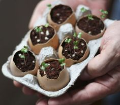 Click pic for 29 Container Gardeing Ideas - Eggshell Plant Starters | DIY Spring Garden Projects