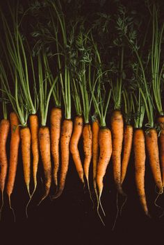 Orange Carrots on black background. Photo byKathrin Koschitzki  This is what our carrots look like, fresh picked from the garden before they make it to your plate...farm to fork!