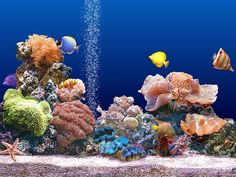 Coral+Reef | Beautiful Coral Reef Photo 11