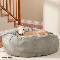 Greyhounds LOVE Slumberballs!