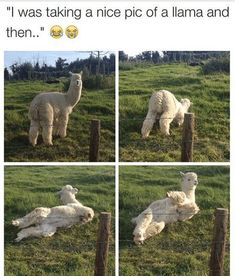 10 memes of the day for Friday, September 2018 - .- 10 Memes des Tages für Freitag, September 2018 – 10 memes of the day for Friday, September 2018 – # for - Funny Animal Memes, Funny Animal Pictures, Cute Funny Animals, Cute Baby Animals, Cat Memes, Funny Cute, Animals And Pets, Funny Work, Hilarious Pictures