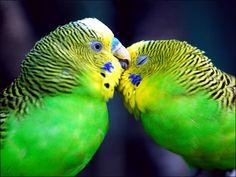 birds - Pesquisa Google