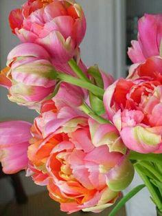 peonies pink + orange