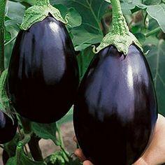 Buy Black Beauty Eggplant Seeds Vegetable seeds in Williston USA — from American Meadows, Inc. Eggplant Plant, Eggplant Seeds, Roast Eggplant, Eggplant Parmesan, Container Vegetables, Planting Vegetables, Veggies, Vegetable Gardening, Raised Beds
