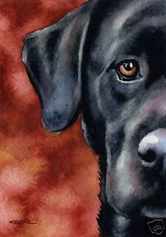 BLACK LAB Watercolor Painting DOG 8 x 10 Art Print Signed Artist DJR