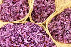 Harvesting Saffron     (Iran)