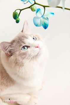 Beautiful cat and the orchid