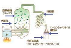 steam_distill.jpg (570×386)
