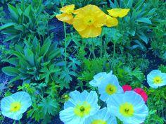 Spring Flowers in Half Moon Bay. Ritz Carlton, Photos, Near San Francisco, California. Pasha Polikarpov