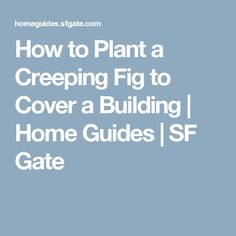 How to Plant a Creeping Fig to Cover a Building | Home Guides | SF Gate