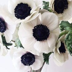 lovely anemone flowers, perfect in any space Fresh Flowers, White Flowers, Beautiful Flowers, White Anemone Flower, Poppy Flowers, Exotic Flowers, Yellow Roses, Purple Flowers, Pink Roses