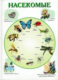 Школа молодого логопеда Russian Language, Montessori Materials, Activities For Kids, Learning, School, Learn Russian, Speech Language Therapy, Insects, Biology