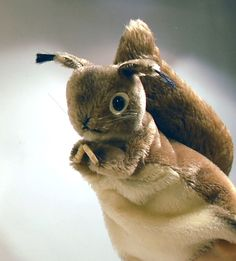 Steiff Squirrel Hand Puppet HandHopsi Eichhorn by secondseed, $49.00