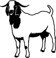 Boer Goat Decals STOA#10 Vinyl Window Decal - Wildlife Decal Silhouette Clip Art, Animal Silhouette, Silhouette Files, Farm Animal Crafts, Farm Animals, Cabras Boer, Window Stickers, Window Decals, Car Stickers