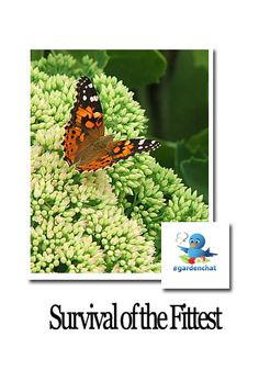#gardenchat topic September2012   Join us by commenting on this pin with the plants you trust that can survive the weather we've endured Summer 2012.  #gardenchat