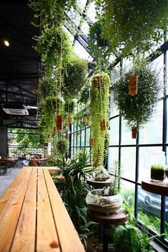 Hanging plants give the greenhouse charm. - All For Herbs And Plants Coffee Shop Design, Cafe Design, House Design, Deco Restaurant, Restaurant Design, Serre Restaurant, Restaurant Interiors, Restaurant Ideas, Magic Garden
