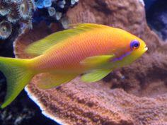 juwel Aquarium unterschrank Salt Water Fish, Salt And Water, Sea Anemone, Water Animals, Beautiful Fish, Larp, Fish Tank, Air Max, Arts And Crafts