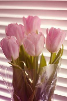 Тюльпаны by Katerina Koroleva on 500px