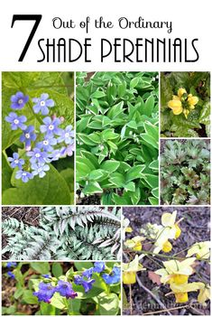 Learn about 7 shade perennials that are a little out of the norm that you may want to add to your garden.
