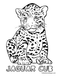 rainforest coloring pages - Baby Jungle Animal Coloring Pages
