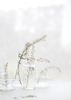 Trockenes Grün in kleinen Glasvasen | Foto: Sabine Wittig