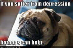 Funny Pug | funny-dog-pictures-depressed-pug